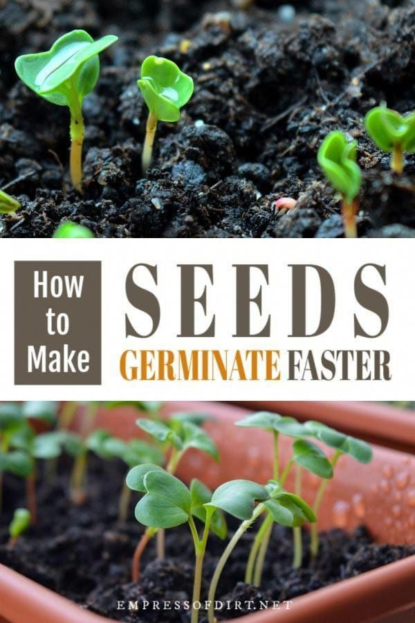 The Dead Soil Needs Increasing Dosages Of Conventional Fertilizer And Still The Plants Are Malnou Seed Germination Growing Vegetables Organic Vegetable Garden