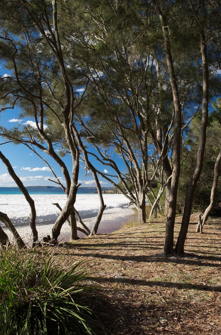 Fancy a day trip to Jervis Bay which includes good food and beautiful Australian beaches? Read on...