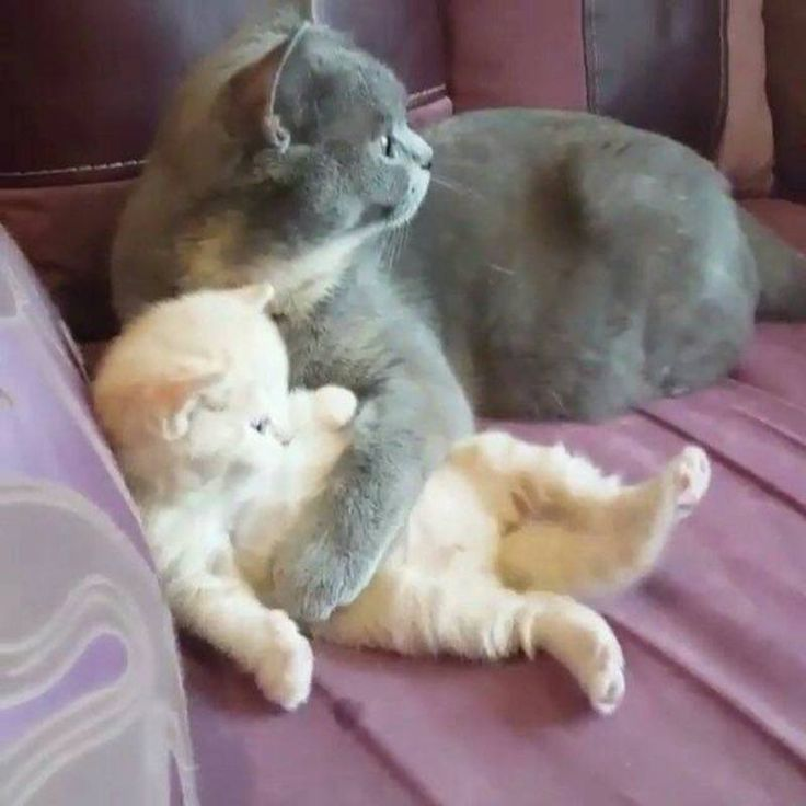 Ce chat est trop mignon, ça mère lui fait un câlin. ❤