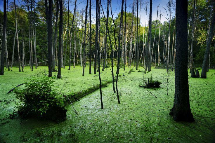 Somewhere in the Masurian woods. by Piotr Skubisz on 500px Trees in mid-forest lake. Masurian Landscape Park (Mazurski Park Krajobrazowy).