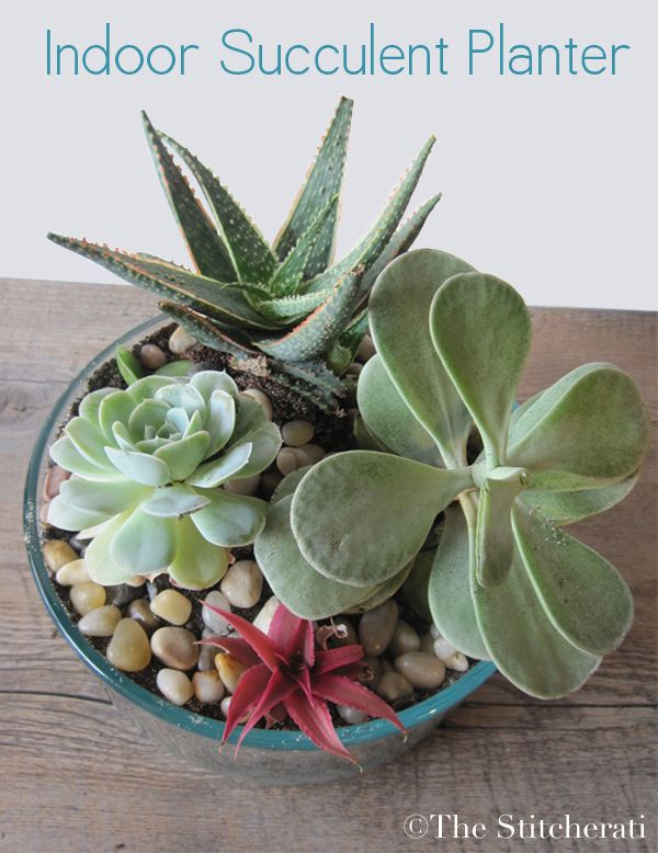 1000 Ideas About Indoor Succulent Garden On Pinterest