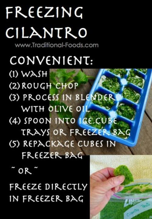 Freeze cilantro! @June Kuiper Kuiper Kuiper mcintyre