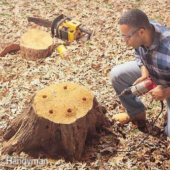 We'll show you how to do a tree stump removal. Use potassium nitrate stump remover to decompose old stumps.