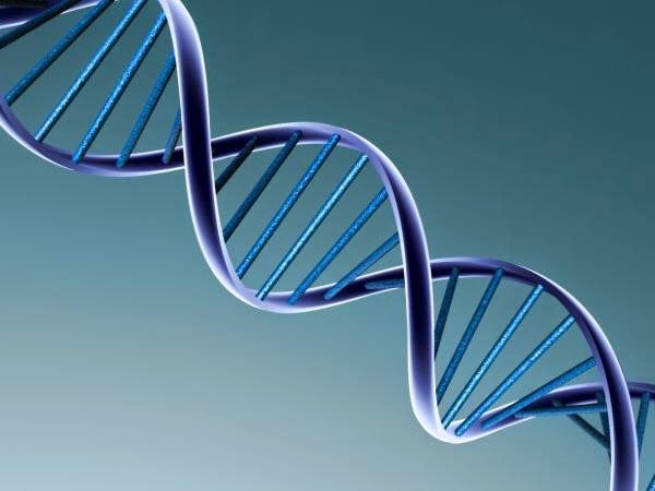 Oldest DNA Ever Found #genealogy #dna