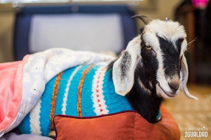 Buenas noches amada Olivia.  Que sueñes con el mundo que tanto deseas: uno en el que todos los animales son libre https://t.co/uygkGjnUWk