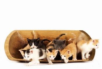 Information on caring for Kittens