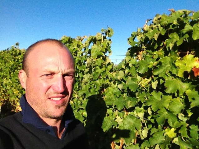 David out in the vineyard during harvest