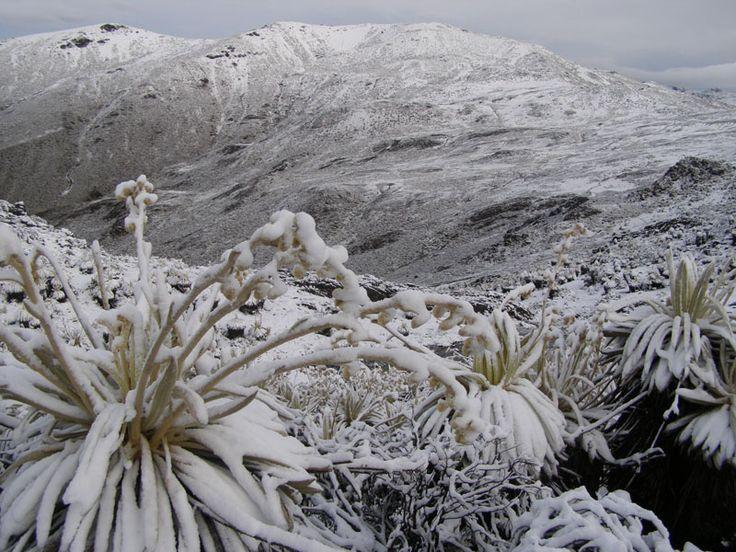 Valle del Pico del Aguila - Pico Del Aguila, Merida - Venezuela