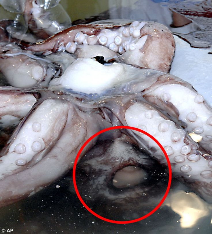 16 best colossal squid