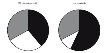 A comparison between human milk and cow's milk - The composition of milk varies according to the animal from which it comes, providing the correct rate of growth and development for the young of that species, thus for human infants, human milk is obviously more suitable than cow's milk. #breastmilk