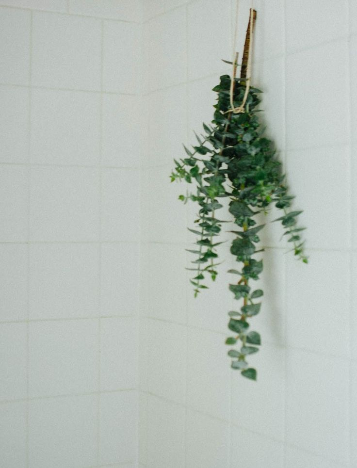 Hang fresh eucalyptus in the shower. The hot steam releases the scent for an invigorating, cleansing wash