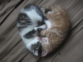 <3 <3 <3 ... gatti mon amour ... <3 <3 <3