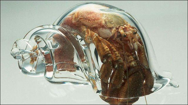 ヤドカリ愛好家のために作られた美しい「ガラスの貝殻」 - DNA