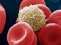 Лейкоцит и эритроциты