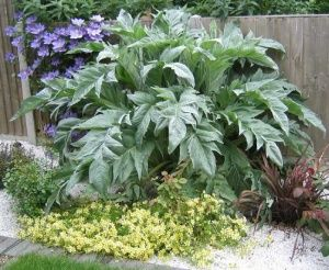Cardoon.  close relative to the Globe Artichoke .. both of which I am attempting to grow this year.