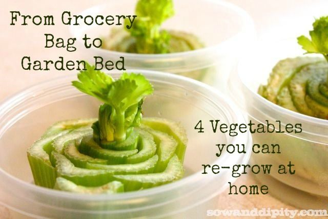 Easy vegetables you can re-grow from produce you bought at the grocery store!