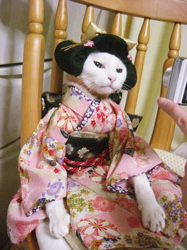 Geisha Kitty