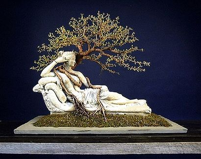 Penelope    Western Hemlock    Discuss this gallery >>    Profile: Nick Lenz >>    Copyright 2005-2006 The Art of Bonsai Project.  All rights reserved.       Site Design by Andy Rutledge :: Male Designer Andy Rutledge   CSS :: XHTML    Site Sponsored, maintained and updated by ofBonsai Magazine