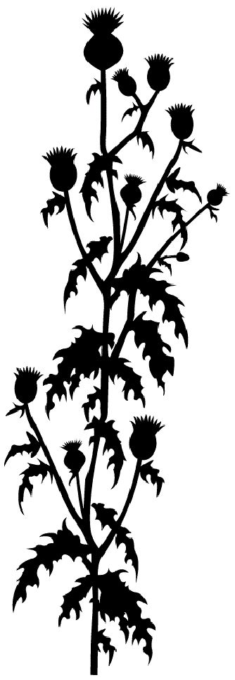 Thistle can be as decorative as every else flower. Just look at this wall sticker ♥