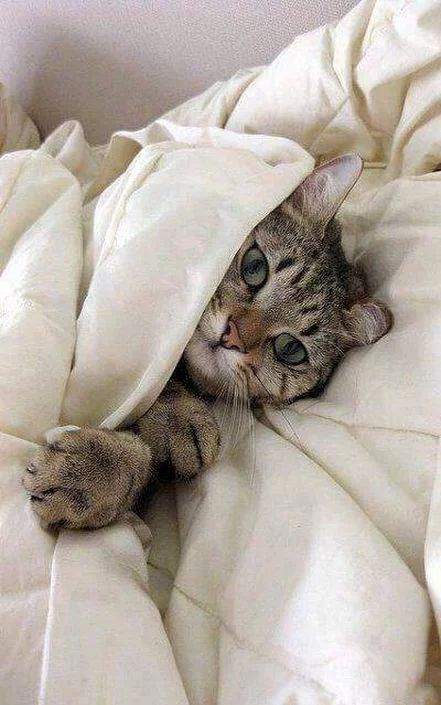 So sweet, and that little paw, gripping the comforter—I can just hear the purring and see that paw kneading the blanket.