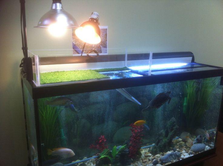 24 best pics images on pinterest fish aquariums turtle for Fish tank turtles