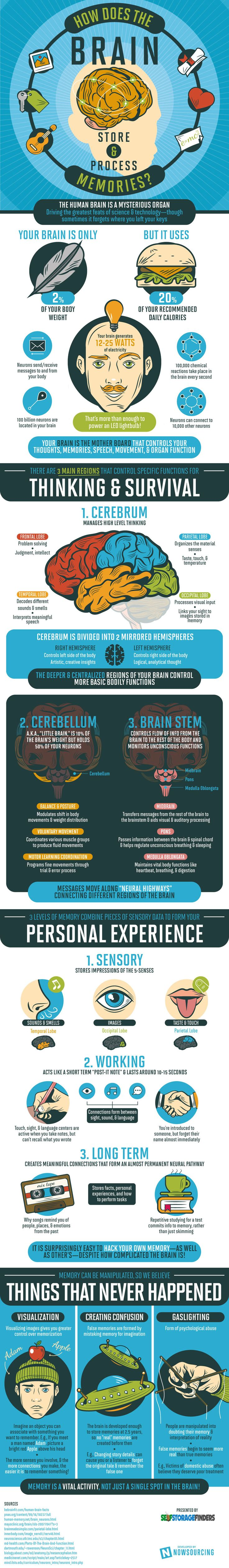 How the Human Brain Store Memories Infographic. Topic: mind, neuroscience, amnesia, dementia, cognitive psychology, memory, Alzheimer's disease, epilepsy, mental health.