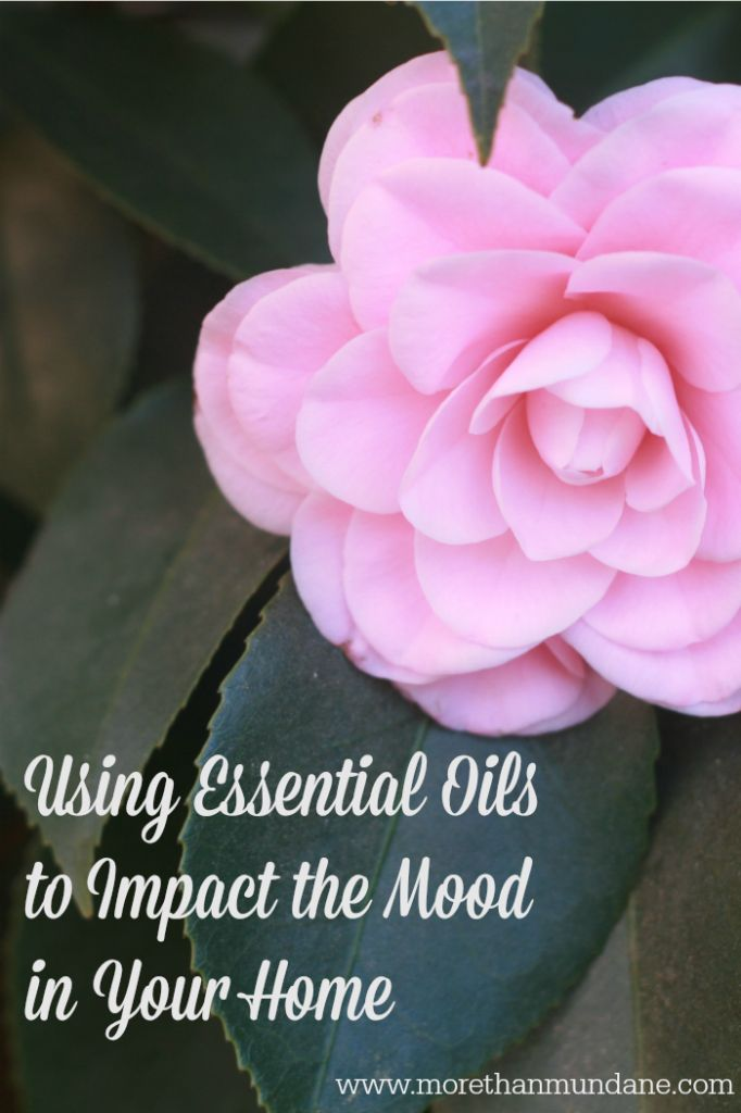 Using Essential Oils to Impact the Mood in Your Home   www.morethanmundane.com