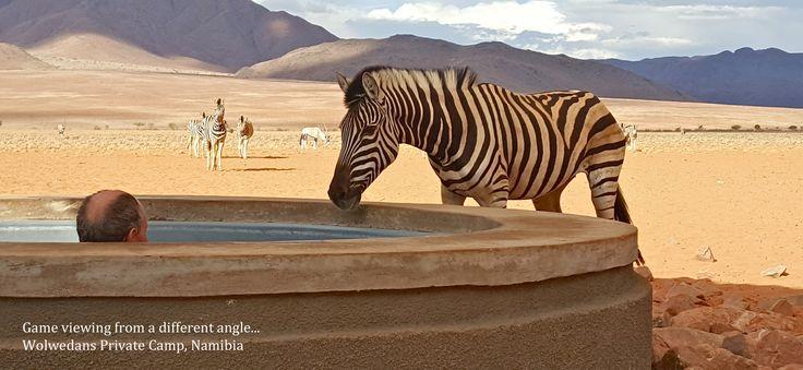 Wolwedans/NamibRand Privatreservat; Verwechslungsgefahr im Wolwedans Private Camp.  'Wolwedans Private Camp' und das entfernt ganz im Süden von NamibRand gelegene 'Boulders Safari Camp' sind mit Tauchbecken ausgestattet, die gerade an heißen Wüstentagen herrlich erfrischende Momente garantieren. Allerdings bedarf es noch der einen oder anderen Lehrstunde, bis auch das letzte Zebra  verstanden haben werden, zwischen ihren eigenen Wasserstellen und den Pools für die Gäste zu unterscheiden.