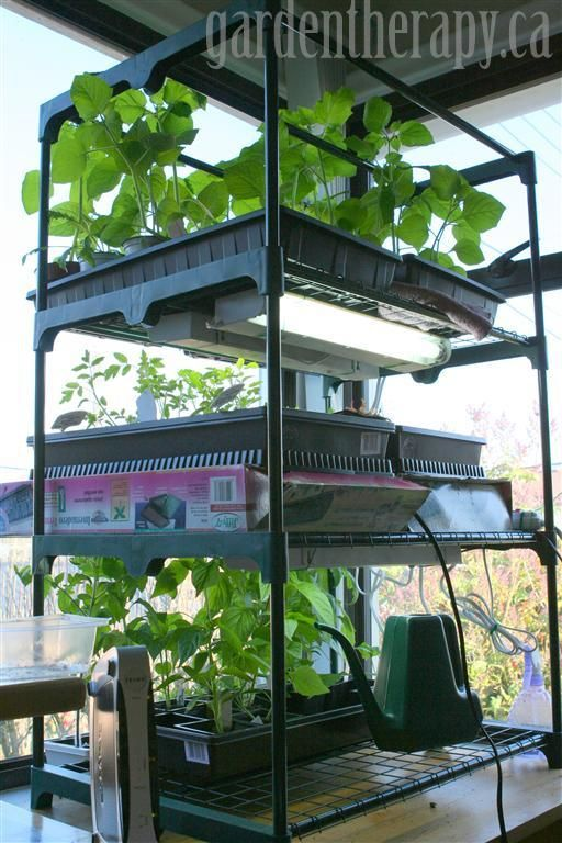 grow light shelving for seed starting indoors gardens shelves and therapy. Black Bedroom Furniture Sets. Home Design Ideas