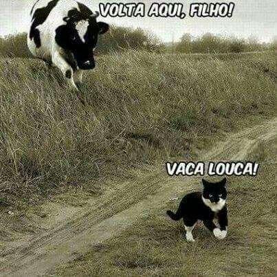 Vaca louca                                                       …
