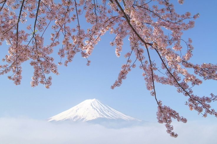 Mt.Fuji 富士山と桜