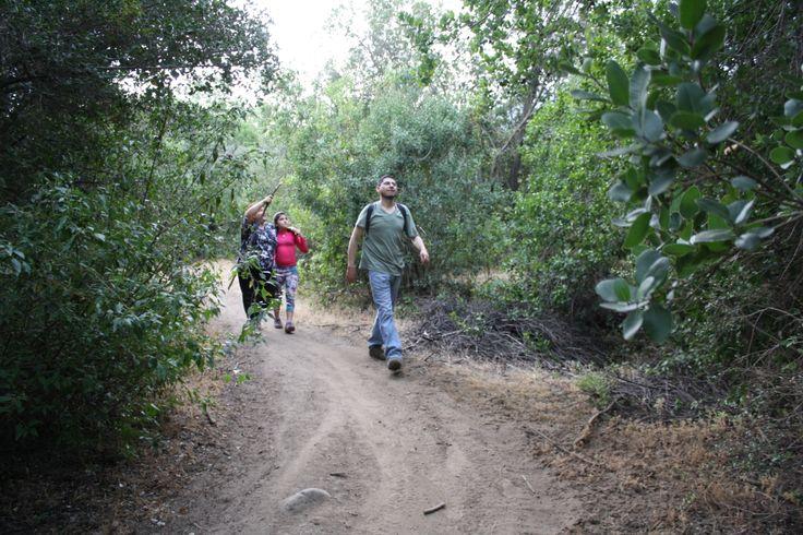 Peumos, Quillay, Colliguay y Arrayanes son parte de los arboles nativos que podrás identificar.