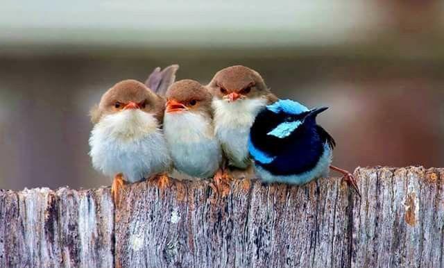 Familia alargada