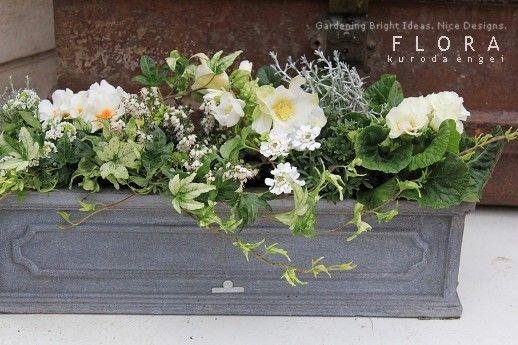 白いウィンドウボックスの画像   フローラのガーデニング・園芸作業日記