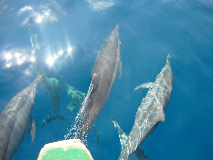 dolphins in the maldives - ah take me back!