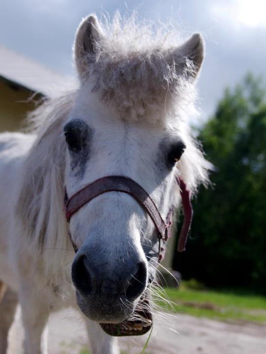 Alber, horse... closer look