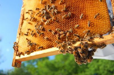 Backyard Beekeeping 101