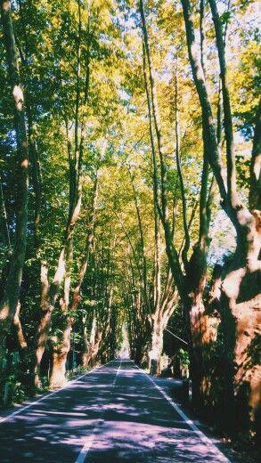 Forrest road.