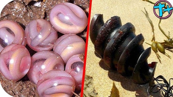 5 animales con los huevos mas raros del mundo | T más