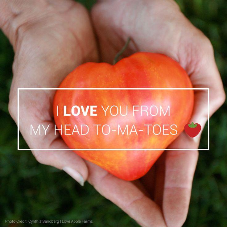 tomato and potato relationship quotes