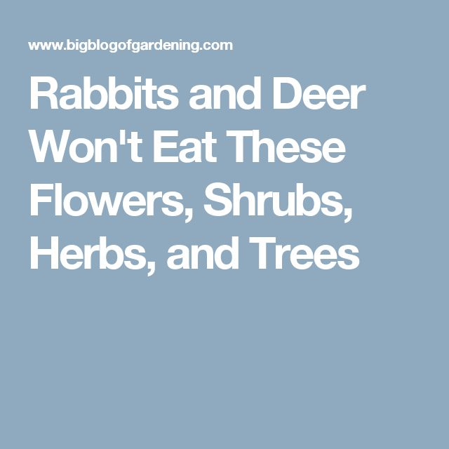 Rabbits And Deer Won 39 T Eat These Flowers Shrubs Herbs