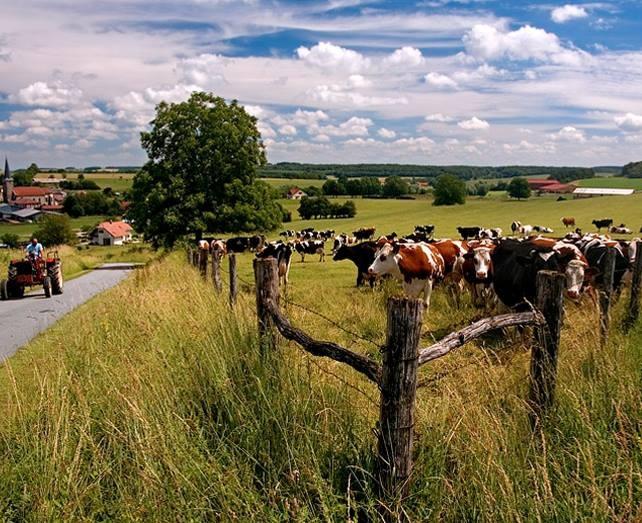 de provincie Limburg