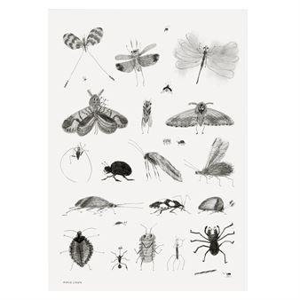 Tämä Bugs juliste tulee ruotsalaiselta Fine Little Daylta ja sen on suunnitellut muotoilija ja kuvittaja Karin Cyrén. Juliste on painettu korkealaatuiselle päällystämättömälle paperille ja siinä on leikkisä, käsin piirretty musta-valkoinen kuva, joka kuvaa erilaisia hyönteisiä.