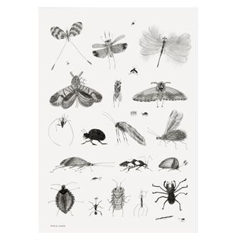 Bring some life to your walls with the charming Bugs poster from the Swedish brand Fine Little Day. The poster was designed by the illustrator Karin Cyrén and is printed on qualitative non-coated paper with a intricate sketches of insects in black and white. The poster is great for a study or kid's room. Beautiful in combination with other posters from Fine Little Day.