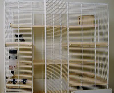 DIY wire shelving chinchilla cage. | DIY cages | Pinterest ...