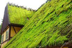 Um telhado verde é uma alternativa viável e sustentável perante os telhados e lajes tradicionais, porque facilita o gerenciamento de grandes cargas de águas pluviais, melhoria térmica, serviços ambientais e novas áreas de lazer. O telhado verde proporciona também um ambiente muito mais fresco do que outros telhados, mantendo o edifício protegido de temperaturas extremas, especialmente no verão, reduzindo em até 3°C. Em ambientes extremamente artificiais como o urbano, promovem o reequilibrio…