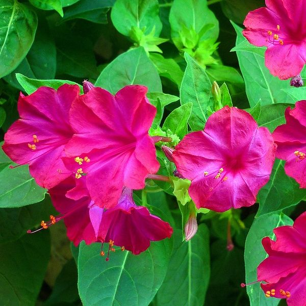 best  all flowers name ideas on   shade plants, Beautiful flower