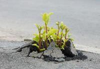 Jak uprawiać glebę w miastach?