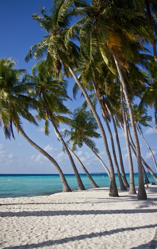 Palm trees, blindingly white sand, electric blue sea.  (Maafushi, Maldives, 2011)