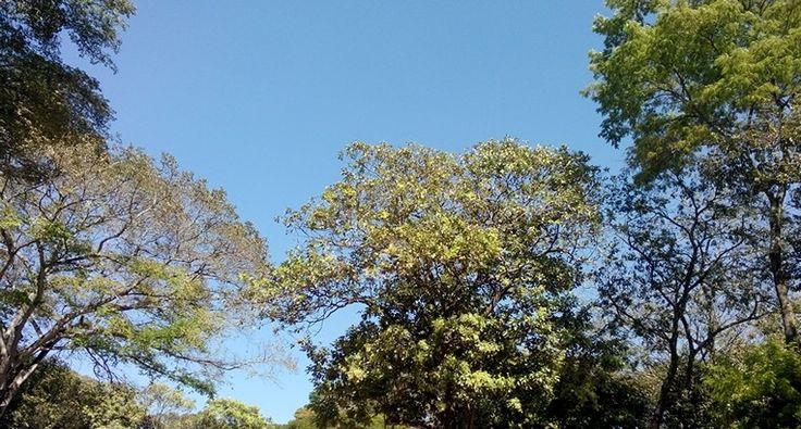 Céu do Mutirama - Goiânia - Goiás - Brasil Fotografia: Sônia Maria www.falandodecrochet.blogspot.com